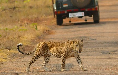Indian Cultural & Wildlife Tour