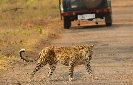 Indian Cultural & Wildlife Tour