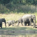 Uttarakhand Wildlife & Adventure Tour