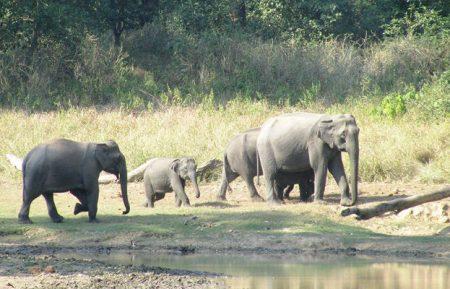 Uttarakhand Wildlife & Adventure Tour