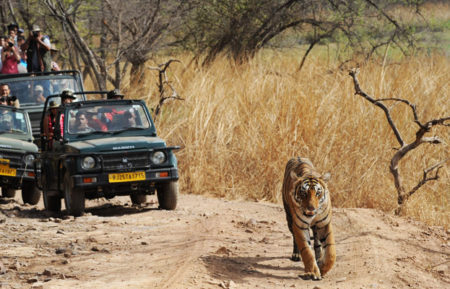 3 Days Delhi Ranthambore Tour Package