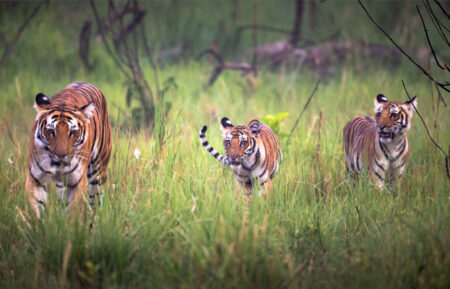 Delhi Jim Corbett Weekend Tour